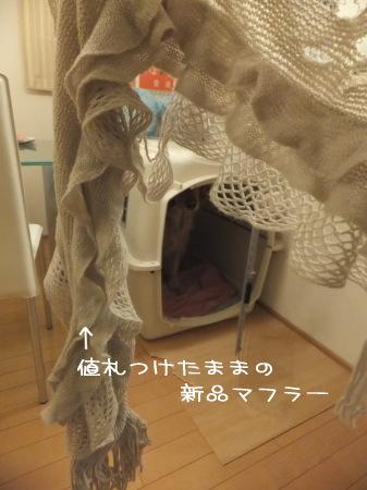 DSCF0069.jpg